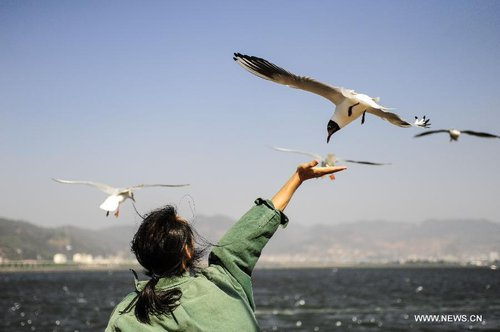 A visitor feeds a black-headed gull by the Dianchi Lake in Kunming, capital of southwest China's Yunnan Province, April 4, 2013, the first day of the three-day Qingming Festival holidays. [Xinhua]
