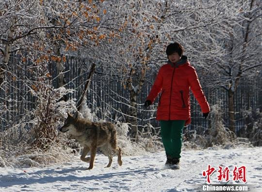 A Chinese Woman and Her 'Wild Wolf Valley'
