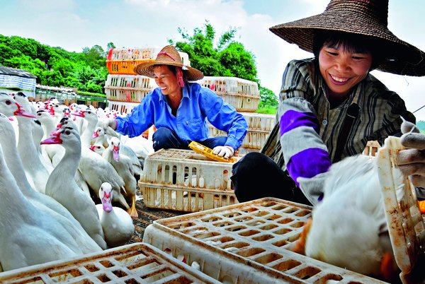 Women Play 'Half-the-Sky' Role in ACWF's Poverty Alleviation Initiatives