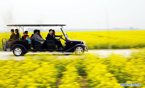 Rapeseed Flowers Attract Many Tourists in North China