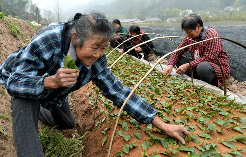 Stricken Woman Bounces Back, Develops Blossoming Tea Business