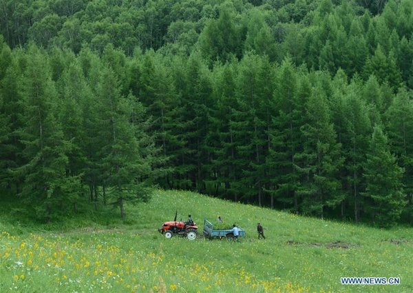 Saihanba Forest Farm in N China's Hebei Nominated for 2017 Champions of the Earth