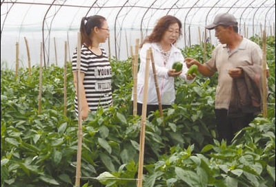 Agricultural Expert Dedicated to Chili Pepper Breeding