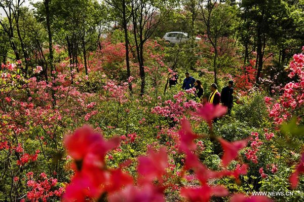 Tourists Enjoy Azalea Flowers in E China