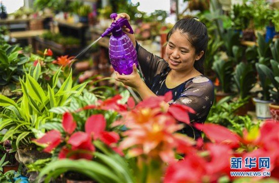Entrepreneur Achieves Success in Blossoming Floriculture Business