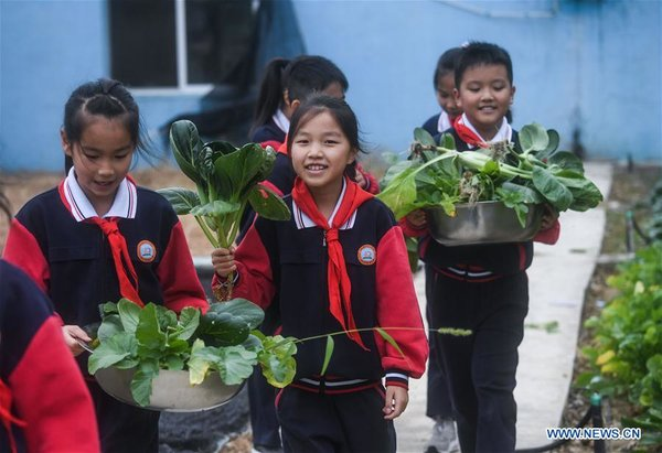 Plantation of Donglin Elementary School in China's Zhejiang Enters Harvest Season