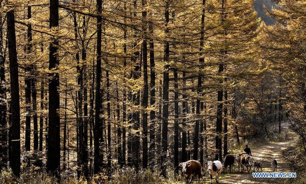 Forest Coverage Rate of Haodifang Forest Farm Reaches 98 Percent