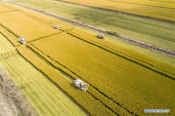 People Embrace Harvest Across China
