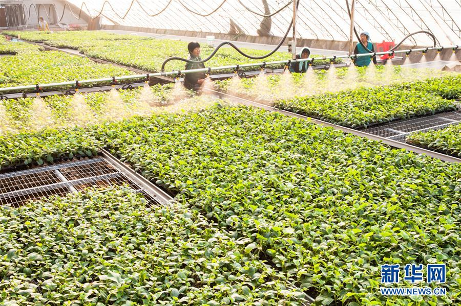 Entrepreneurial Couple Promote Vegetable Growing in E China Helping Locals to Achieve Prosperity