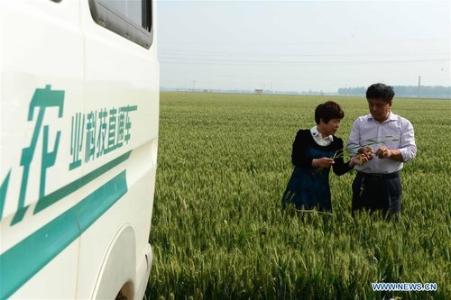 Big Data Reshaping Harvest for Chinese Farmers