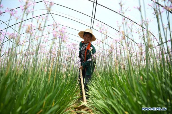 Farmers Find New Way to Increase Income Through Eco-Leisure Agriculture in China's Anhui