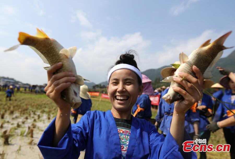 Women of Dong Ethnic Group Celebrate Rice Harvest in Guangxi
